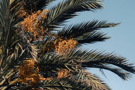 Date palm and blue sky. Vintage style. Background with palm.