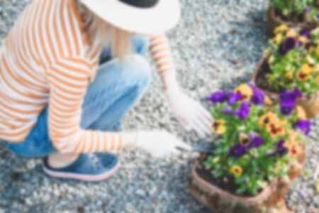 Blur. Blurred background. Work in the garden. Spring time. Woman in light beige hat work with flowers. Pansies flower.
