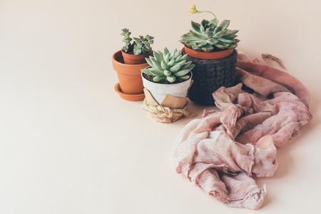 Cozy garden of succulents in original pots on a pastel background and delicate drapery 版權商用圖片