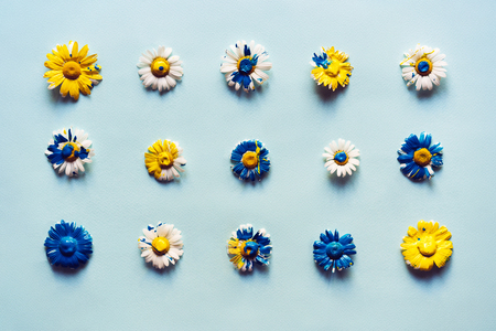 Flat lay from the head of daisies painted with blue and yellow acrylic paints. Banco de Imagens