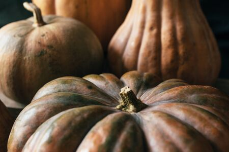Edible squash close-up. Relief and texture of vegetables. Autumn background