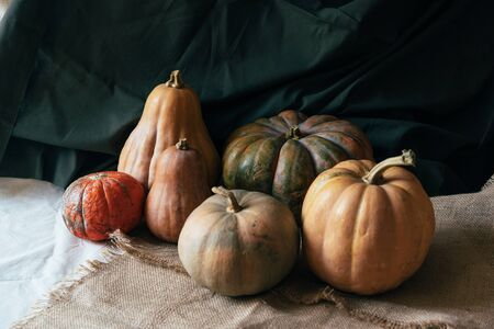 A simple still life with several large autumn pumpkins on dark natural draperies. Festive thanksgiving content.