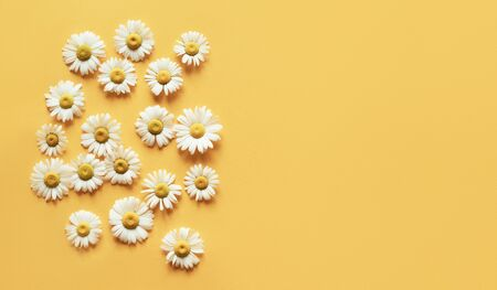 Minimalistic yellow background with camomile heads and place for an inscription. Natural concept. Spring motive.