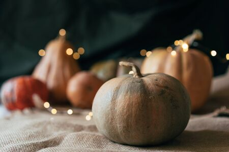 Ripe large pumpkins of various shapes with a garland. Rustic still life.