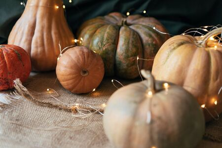 Close up ripe large pumpkins of various shapes with a garland. Rustic still life. Banco de Imagens