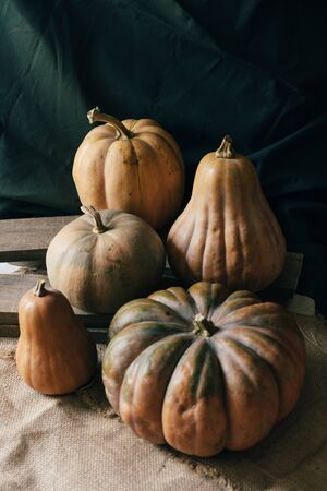 Ripe large pumpkins of various shapes. Rustic autumn concept. Decoration for Halloween.