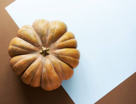 Tremendous textured pumpkin on a blue simple background with place for text. Thanksgiving content and autumn texts.
