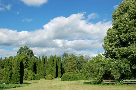 Pittoresco paesaggio (alberi, cespugli, erba, il cielo sereno) Archivio Fotografico - 1505080