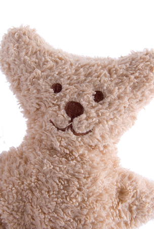 Portrait of a teddy bear on a white background
