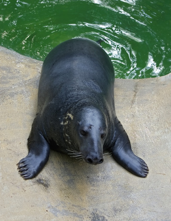 The seal has got out of water on a stone photo