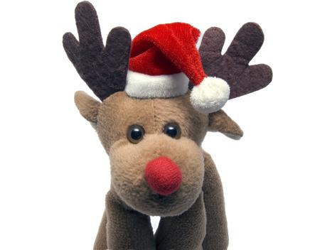 Portrait of an elk in a christmas cap