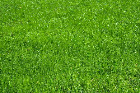 Greater area of a  green grass