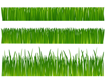 Grass (lawn) on white background Vector