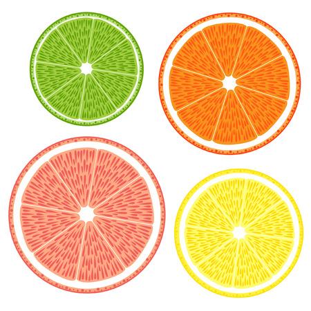 Lime, grapefruit,  orange, lemon Vector