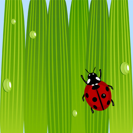 Ladybug on grass with water drops