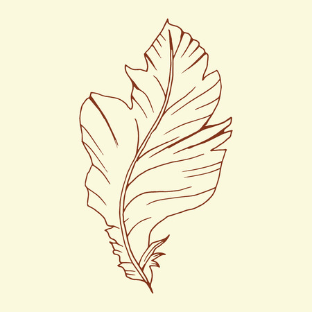 Decorative brown line art doodle style tribal feather Illustration