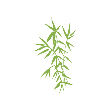lucky bamboo: Bamboo green plant isolated vector nature illustration