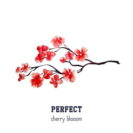 Realistic red sakura blossom.