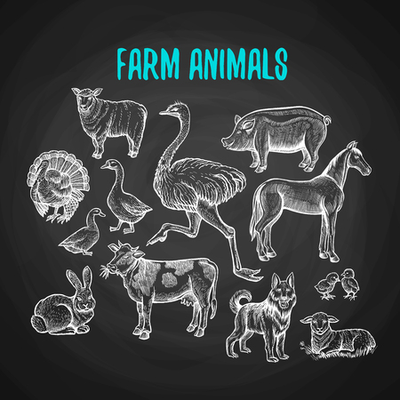 Set of farm animals in the style of chalk on a blackboard. Vector illustration of farm animals with cow, sheep, pig, horse, ostrich, guard dog, duck, rabbit, goose, turkey, lamb, pork. Illustration