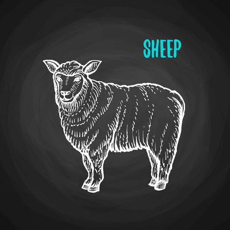 Animal sheep in the style of chalk on a blackboard. Vector illustration of farm animal Imagens - 82321135