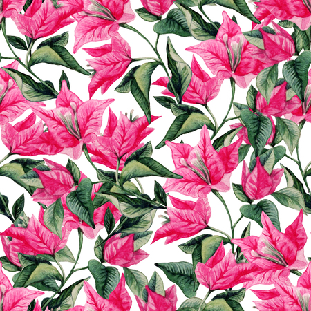 Bougainvillea flower seamless pattern isolated on white background. Watercolor illustration of Portugal flower.
