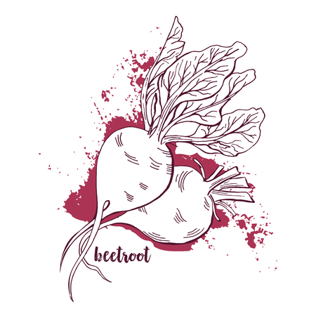 Beetroots with leaves in hand drawn watercolor painting on white background.