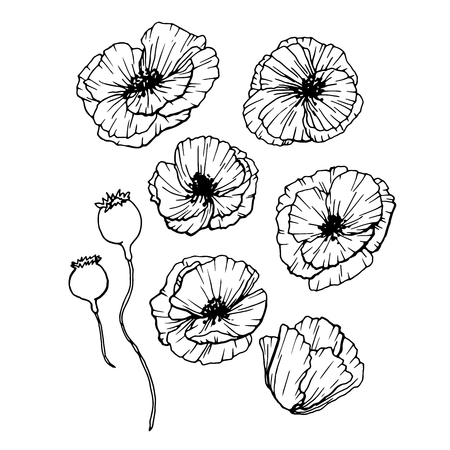 Poppies Flowers Hand Drawn Set. Line Art Contour Drawing Style. Isolated Vector Poppy Bud Illustration for Greeting Cards Design 免版税图像 - 96755775