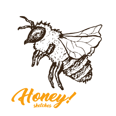Honey Sketch Bee, Honey Hand Drawn Superfood Organic Products Design, Vector Illustration. Black Outline Engraving Elements.Vintage Isolated Vector Illustration