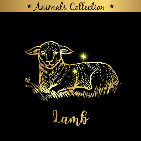 Golden and royal Hand Drawn Emblem of farm Lamb animal. Butchery shop branding, dietary meat products. Butcher market. Gold Outline Sketch and lettering. Contour drawing concept