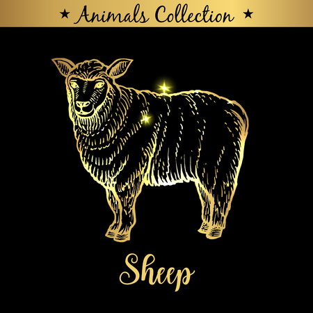 Golden and royal Hand Drawn Emblem of farm Sheep animal. Butchery shop branding, dietary meat products. Butcher market. Gold Outline Sketch and lettering. Contour drawing concept
