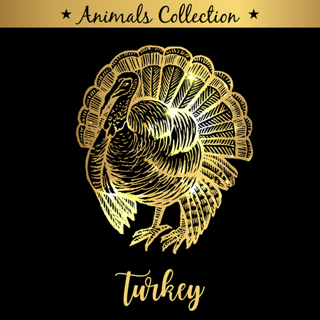 Golden and royal Hand Drawn Emblem of farm Turkey animal. Butchery shop branding, dietary meat products. Butcher market. Gold Outline Sketch and lettering. Contour drawing concept