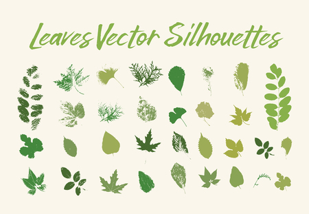 Skeletonizing insect damaged leaves. Blackberry and walnut tree, aspen and birch, maple and thuja, rowanberry and ginkgo. Print of leaf with veins, petiole texture. Botany and forest, wood theme