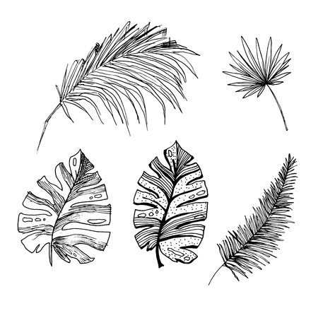 Set of isolated sketched coconut or queen palm trees with leaves. Beach and rainforest, desert coco flora. Foliage of subtropical fern. Green palmae or jungle arecaceae. Botany, environment theme Illustration