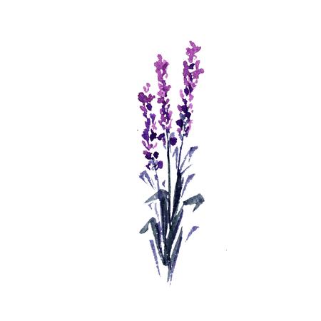 Lavendel bloem aquarel illustratie. Rechte lavendeltakken Bruiloft en decoratie bloemdessin. Liefde en huwelijk. Valentijnsdag symbool. Drie lavendeltakjes. Geïsoleerde raster