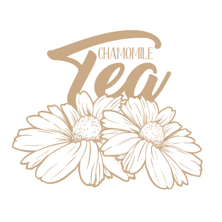 Chamomile tea hand drawn engraving illustration. Organic drink. Tea herbs drawing. Camomile packaging and advertising design. Herbal drink logo concept.