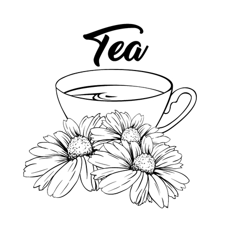 Porcelain or Ceramic Tea Cup. Chamomile or Daisy Flower and Green Tea. Herbal Therapy. Made Tea with Matricaria Loose Herbs. Vector Illustration. Banner Design, Restaurant Menu, English Breakfast.