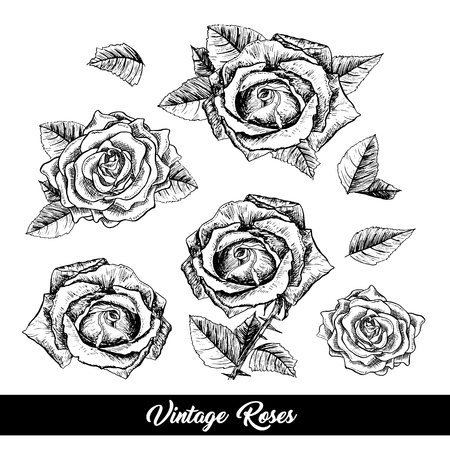 Roses hand drawn vector illustration. Black and white rosebuds ink pen cliparts. Floral outline drawings set. Flower sketches with vintage roses. Isolated floral engraving design elements