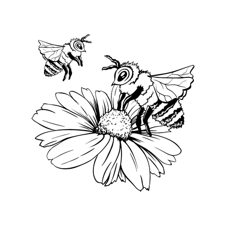 Chamomile Bud and Two Bees or Group of Wasps. Pollination Process. Hand drawn ink pen illustration, flower freehand drawing, isolated sketch