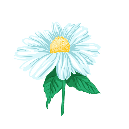 Daisy or Chamomile Tea Herb Flower and Green Leaves. Herbal Therapy. Botany Plant, Matricaria Loose Herbs. Isolated Vector Illustration of Camomile. Floral Blossom for Agriculture Packaging Design. 向量圖像