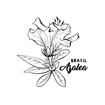 Azalea Flower Brazilian Symbol, ericaceae flowers, hand drawn logo illustration. Beautiful blooming plant inky sketch. Freehand outline floral blossom. Monochrome graphic isolated design element