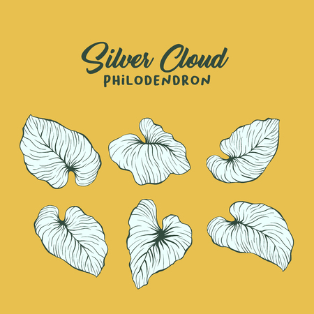 Silver cloud, philodendron vector illustration set. Palm leaves outline drawing pack. Jungle, rainforest foliage and lettering composition. Exotic, tropical monstera leaves. Realistic leaf drawing
