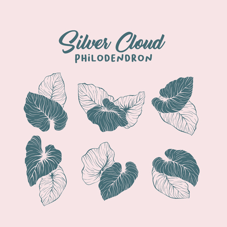 Silver cloud, palm leaf contour illustration set. Monstera leaves silhouettes pack. Jungle, rainforest leafage and handwritten lettering composition. Exotic, tropical foliage outline drawing Ilustração