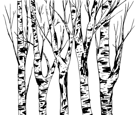 Birch Trees Trunk with Bark Texture, forest isolated vector. Black brush strokes. Abstract Hand-drawn Sketch design or Backdrop.