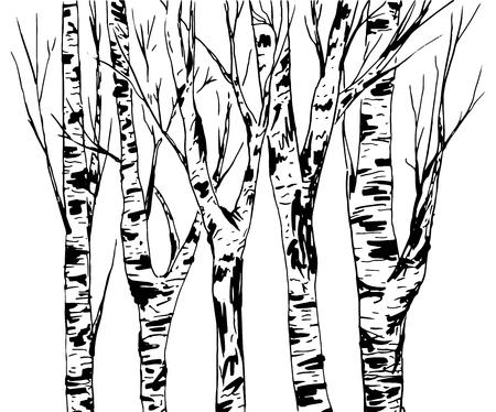 Birkenstamm mit Rinde Textur, Wald isolierten Vektor. Schwarze Pinselstriche. Abstraktes handgezeichnetes Skizzendesign oder Hintergrund.