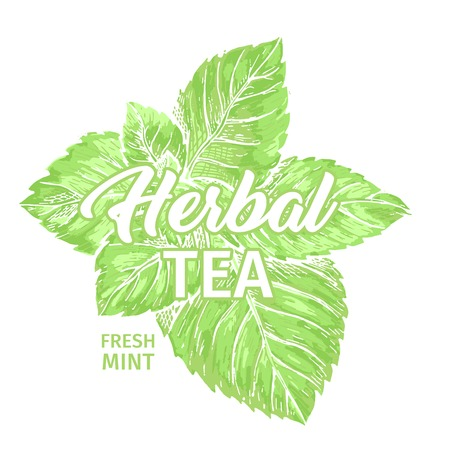 Herbal Tea with Fresh Mint Logo Template. Isolated Hand Drawn Marker Painting Label with Peppermint. Spearmint Botany Plant and Hand-Lettering Calligraphy Inscription. Botanical Design, Medical theme.