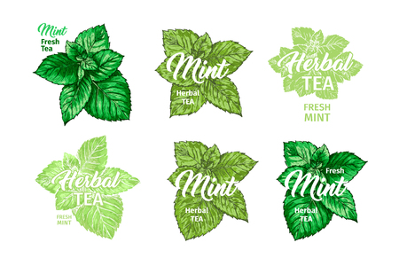 Herbal Tea with Fresh Mint Logo Templates Set. Isolated Hand Drawn Marker Painting Labels with Peppermint. Spearmint Botany Plants and Hand-Lettering Inscription. Botanical Design, Medical theme.