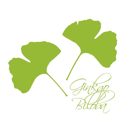 Ginkgo Biloba Leaves Green Silhouette On White Background With Lettering Calligraphy. Hand Drawn Medical Organic Plant Vector Illustration.