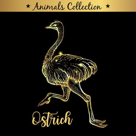 Golden and royal Hand Drawn Emblem of farm Ostrich Bird animal. Butchery shop branding, meat products. Butcher market. Gold Outline Sketch and lettering. Contour drawing concept