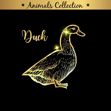 Emblème doré et royal dessiné à la main d'un animal de canard de ferme. Marque de boucherie, produits à base de viande. Marché de boucherie. Croquis et lettrage de contour d'or. Concept de dessin de contour Vecteurs