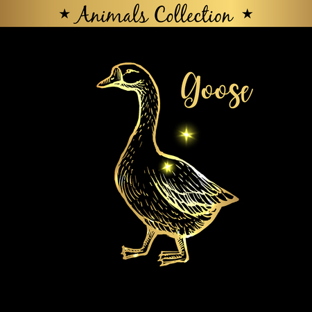 Golden and royal Hand Drawn Emblem of farm Goose animal. Butchery shop branding, meat products. Butcher market. Gold Outline Sketch and lettering. Contour drawing concept Stock Illustratie